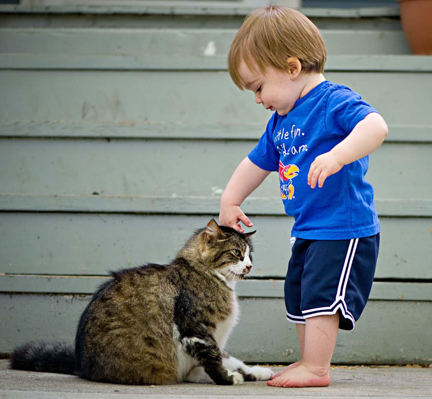 kitten not peeing