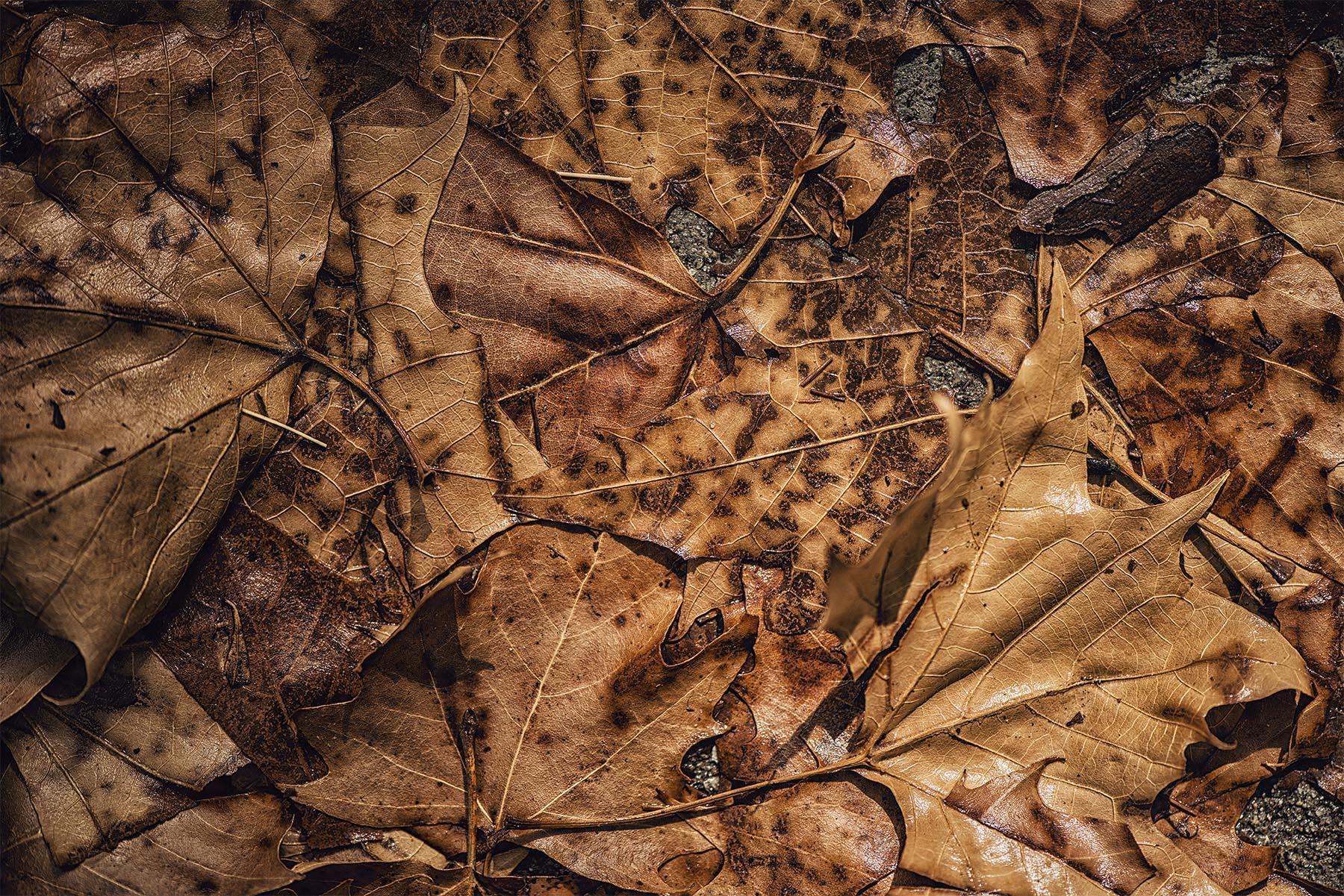 brown leaves | earl's world