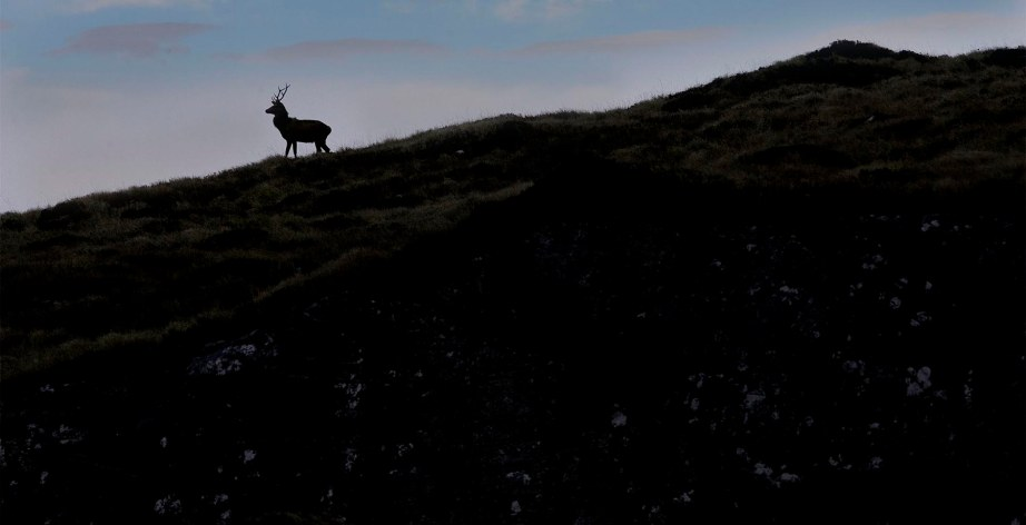 irish deer