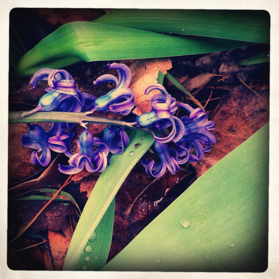 small flowres purple