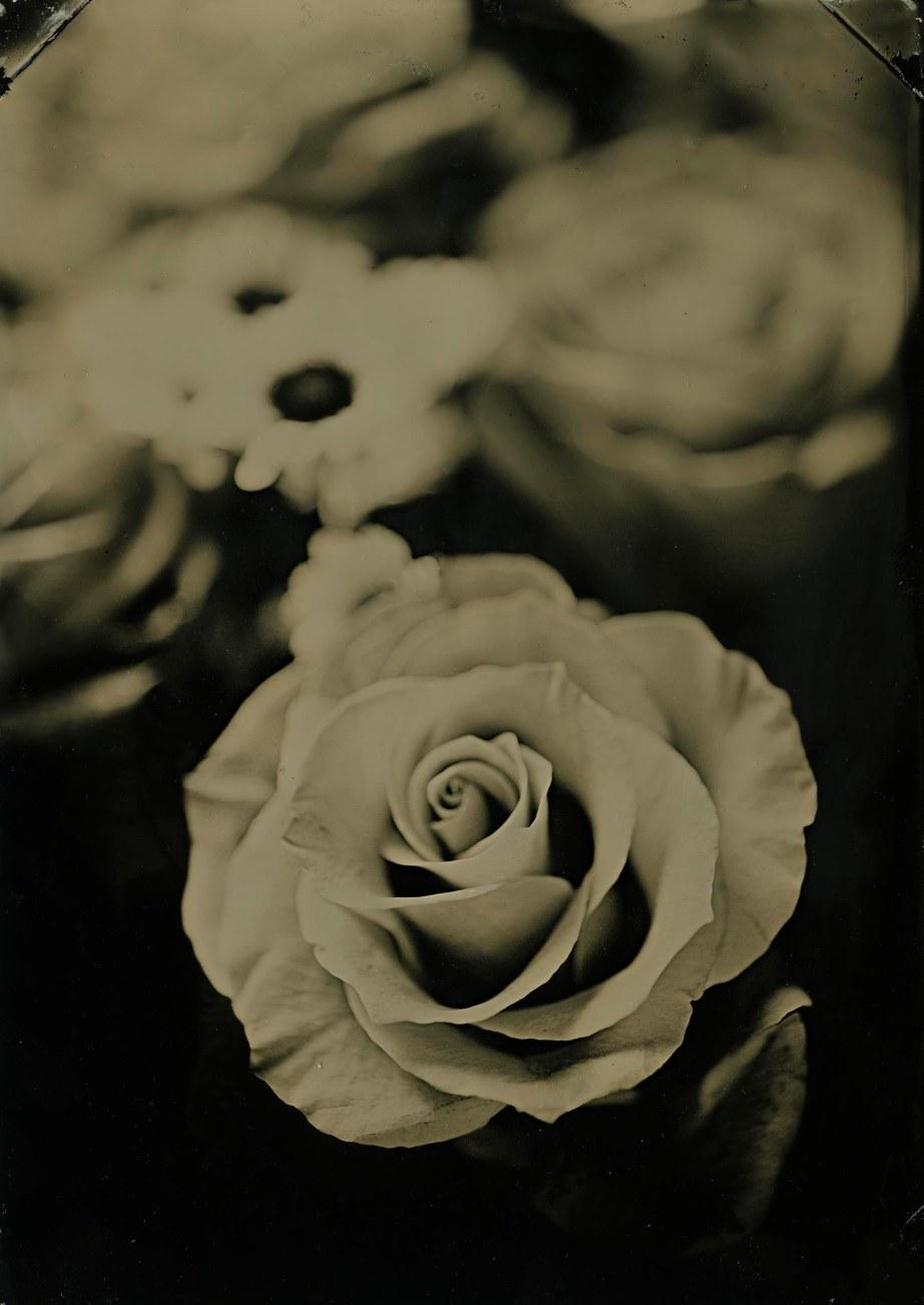 lil rose
